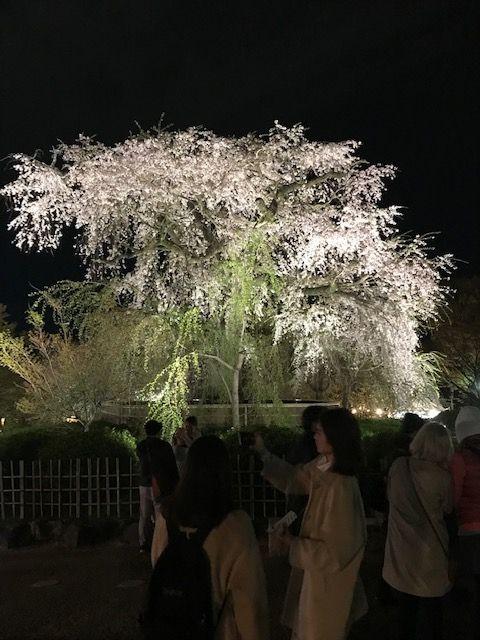 Kyoto after Dark