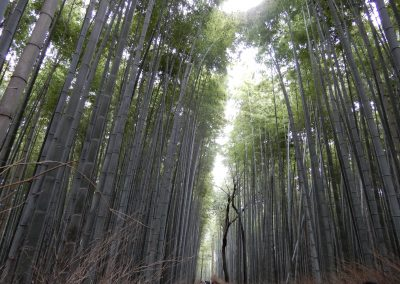 Bamboo Grove (1)