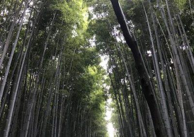 Bamboo Grove 2